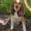 Персонажа новой книги Денниса Лихэйна будут звать в честь того, кто найдет пропавшую собаку писателя