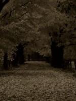 «Темным аллеям» Бунина 60 лет
