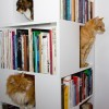 Любимые книги и… котики