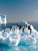 10 лучших художественных книг об Антарктиде