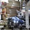 Иркутчанин открыл приют для бездомных книг