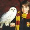 «Гарри Поттер» обвинен в исчезновении редких вид сов