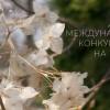 Начался Х Международный конкурс хайку на русском