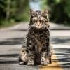 Выложили новый трейлер «Кладбища домашних животных» Кинга