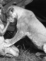 «Сердце этой женщины всегда было полно любви к дикой природе и ее созданиям, и эта любовь нашла отклик в сердцах миллионов» – 20 января 1910 года родилась Джой Адамсон
