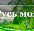Объявили лауреатов литературной Есенинской премии