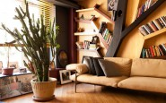 Конкурент кактусов и фикусов — домашнее книжное дерево