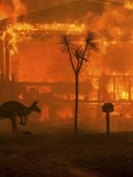 Австралийские писатели запустили кампанию в поддержку пожарных