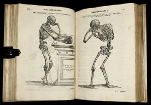 Везалий. De Humanis Corporis Fabrica. Страницы книги