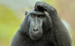 черная обезьяна