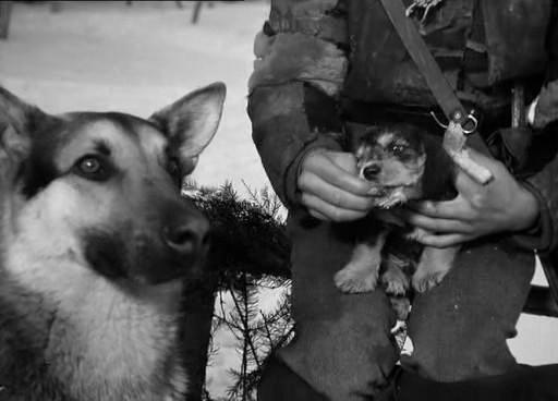 Шарик из фильма Четыре танкиста и собака