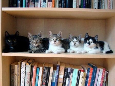 нечего читать? читайте котов!