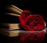 читаем книги с розой в названии