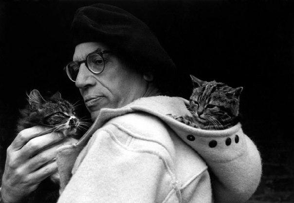 Пол Гэллико и его кошки