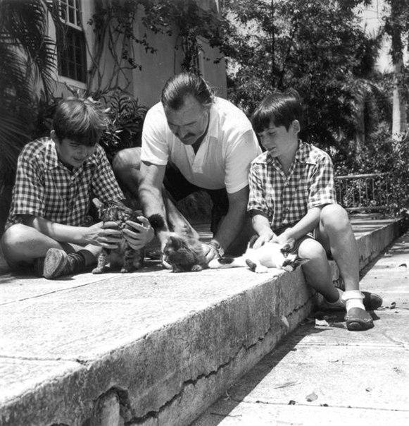 Хэмингуэй, котик и дети