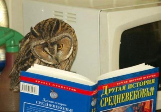 читающая сова