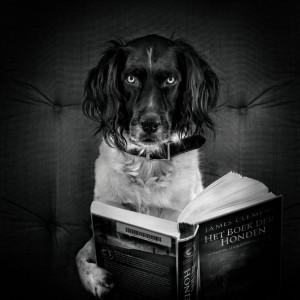 Олег Дивов,  Мастер собак, книги о собаках, анонсы книг, Даниэль Пеннак, Собака Пес, Дин Кунц, Ангелы-хранители, 10 книг о собаках, 10 лучших книг, что читать
