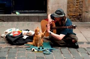 Джеймс Боуэн и кот Боб, Уличный кот по имени Боб, новости литературы, бестселлеры
