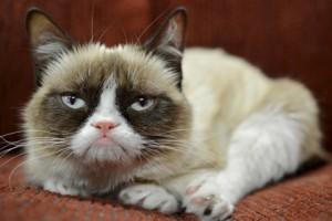 """""""Эксмо"""" выпустит книгу о Грампи Кэт, Grumpy Cat, сердитый котик, книги о животных"""