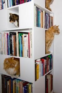 Любимые книги и... котики, литература в картинках