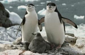 Пингвины из зоопарка Нью-Йорка, запрещенная литература, новости библиотеки