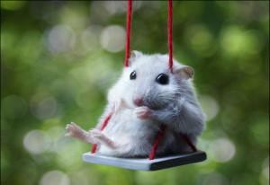 10 лучших книг о мышах   , что читать, лучшие книги, подборка книг