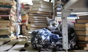 Приют для книг